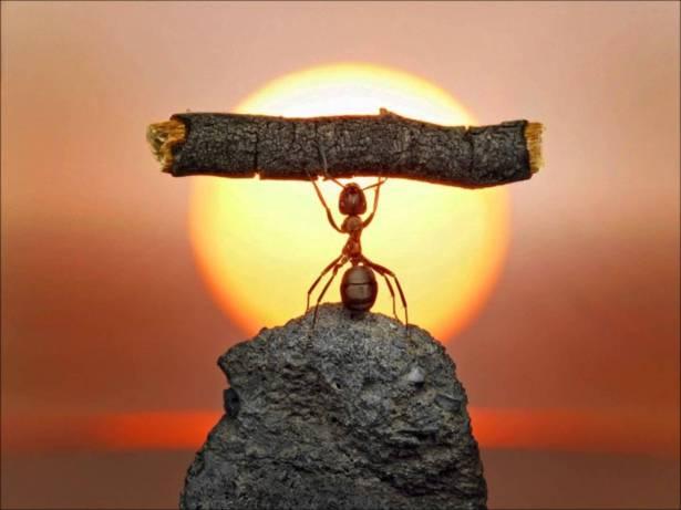 La-formica-stonata-e-la-cicala-sfaticata