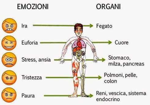 emozioni-organi.jpg
